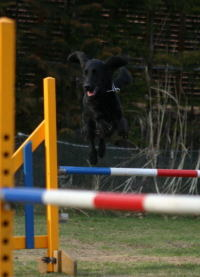Jump1